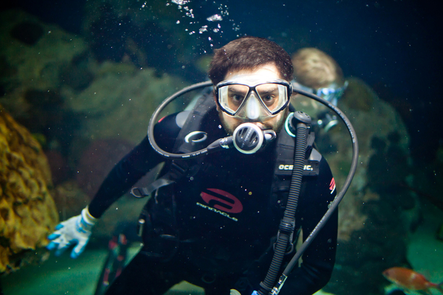 brian weitz of animal collective scuba dives at the national aquarium in baltimore.